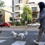 سگ گردانی قوانین